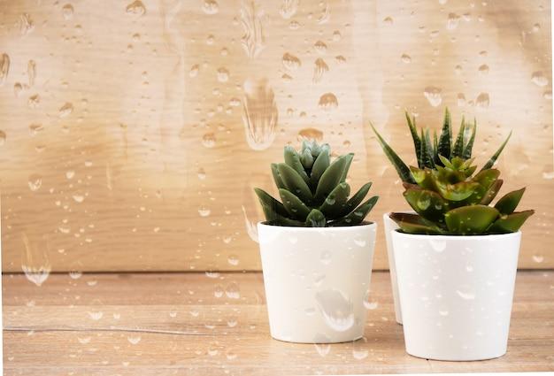 Zbiór różnych kaktusów i sukulentów za deszczową szybą.