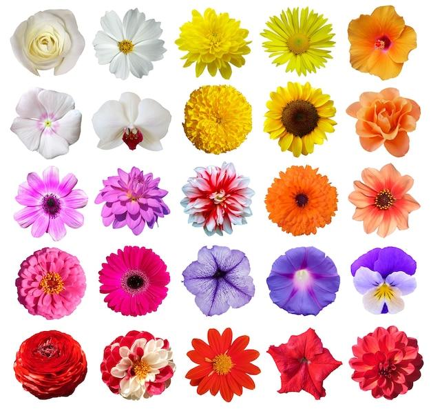 Zbiór różnych pięknych kwiatów na białym tle.