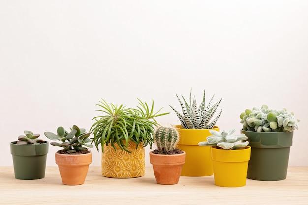 Zbiór różnych roślin w kolorowych doniczkach.