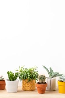 Zbiór różnych sukulentów i roślin w kolorowych doniczkach.