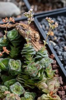 Zbiór różnych tropikalnych kaktusów i sukulentów w różnych doniczkach. kaktus doniczkowy w ogrodzie szklarniowym