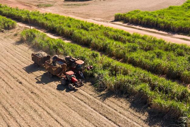 Zbiór trzciny cukrowej - uruchomienie kombajnu na plantacji trzciny cukrowej - przemysł cukrowniczy i etanolowy - widok z lotu ptaka