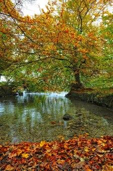 Zbiornik wodny w pobliżu drzewa w ciągu dnia