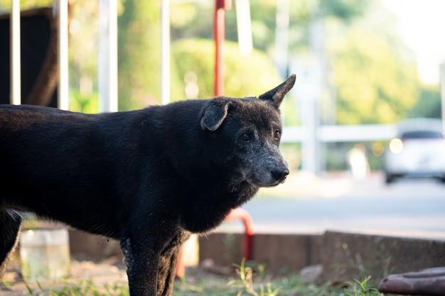 Zbłąkany czarny pies.