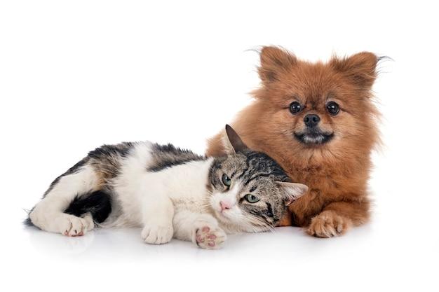 Zbłąkany kot i szpic