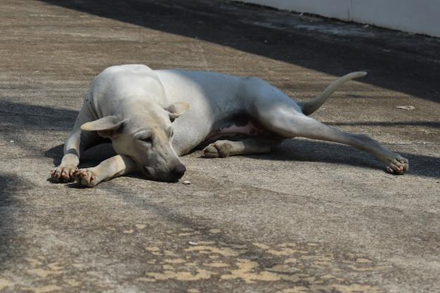 Zbłąkany pies uliczny. problem bezpańskich zwierząt ulicznych.
