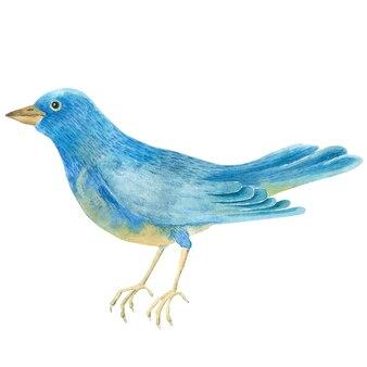 Zbliżenie: akwarela niebieski ptak