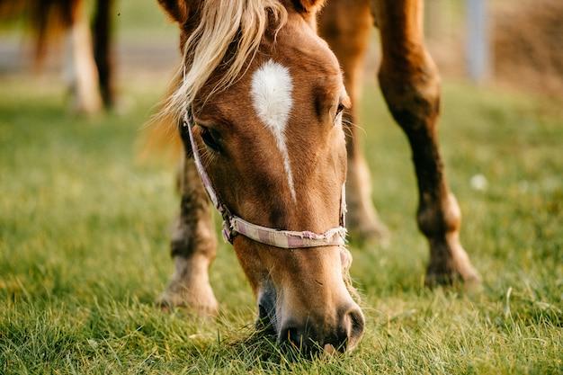 Zbliżenie artystyczny trybowy śmieszny portret koń przy paśnikiem plenerowym przy naturą. piękny kaganiec koni. rolnictwo i hodowla w lecie. zwierzęta domowe ssak ssaki.