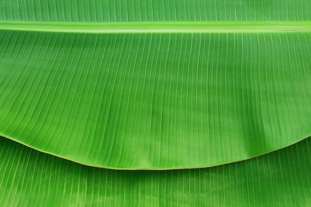 Zbliżenie bananowy liść tekstury abstrakta tło