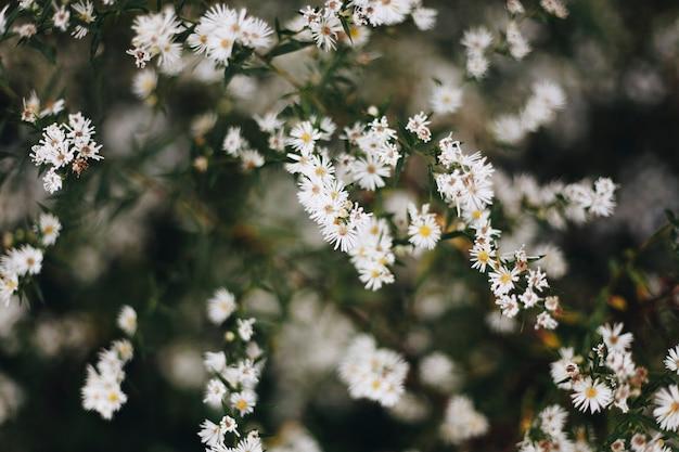 Zbliżenie białego kwiatu tnącego