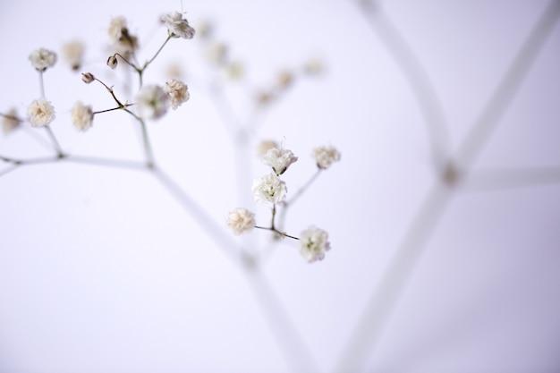 Zbliżenie biały kwiat.