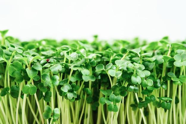 Zbliżenie brokuły microgreen