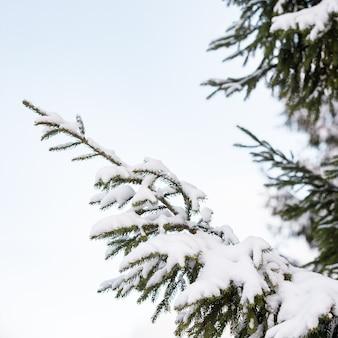 Zbliżenie choinki pokryte śniegiem w zimowym lesie