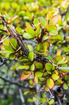 Zbliżenie ciernistej rośliny i liści z czerwonym marginesem