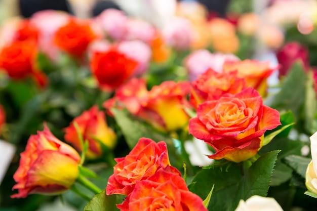 Zbliżenie czerwonych róż w ogrodzie