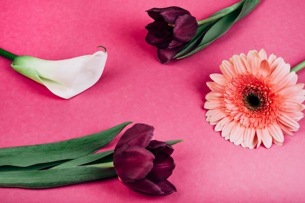 Zbliżenie: delikatna biała lilia aron; tulipany; gerbera kwiaty na różowym tle