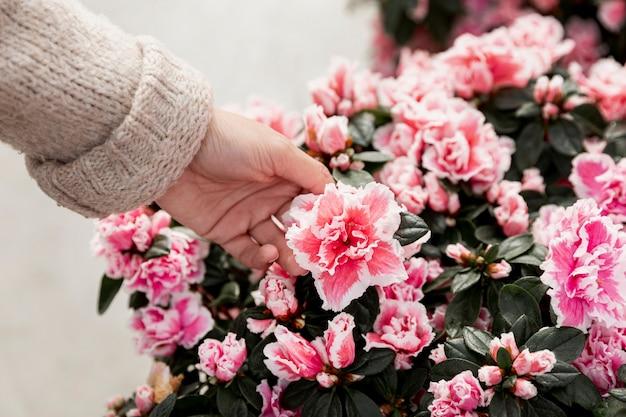 Zbliżenie dłoni dotykając kwitnących kwiatów