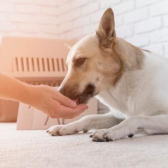 Zbliżenie dłoni dotykając nosa psa