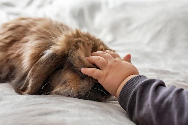 Zbliżenie dłoni dziecka pieszczoty królika