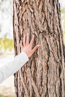 Zbliżenie dłoni dziewczyny dotykając kory drzewa