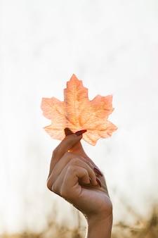 Zbliżenie dłoni kobieta trzyma liść klonu na zewnątrz
