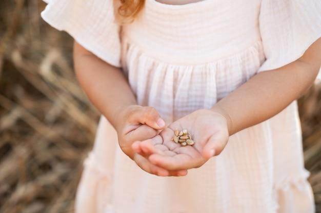 Zbliżenie dłoni małej dziewczynki z ziarnami pszenicy.