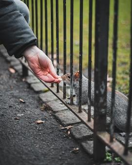 Zbliżenie dłoni osoby karmiącej wiewiórkę