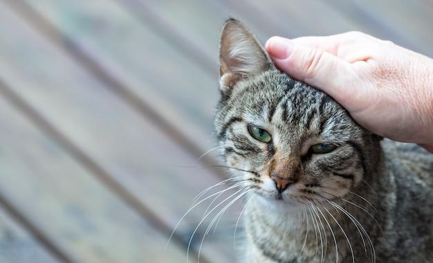 Zbliżenie dłoni pieszczącej uroczego szarego kota w paski