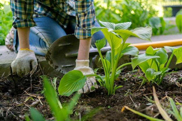 Zbliżenie dłoni pracownika ogrodu w rękawiczkach przesadza młode kiełki