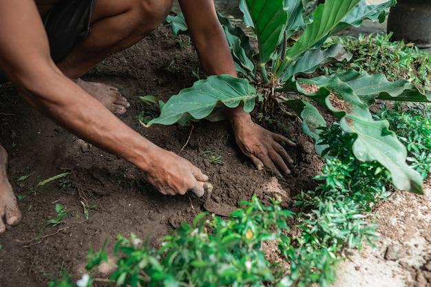 Zbliżenie dłoni sadzenie roślin ogrodnik w ogrodzie letnim w godzinach porannych.