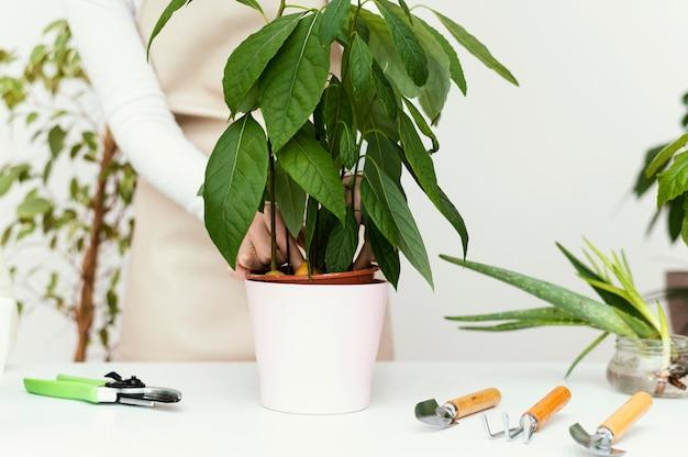 Zbliżenie dłoni sprawdzanie roślin