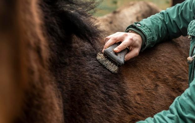 Zbliżenie dłoni szczotkowanie konia na zewnątrz