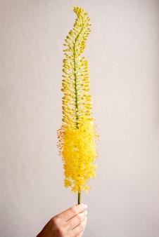 Zbliżenie dłoni trzymającej kwiat