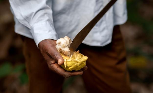 Zbliżenie dłoni trzymającej owoce