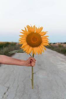 Zbliżenie dłoni trzymającej piękny słonecznik