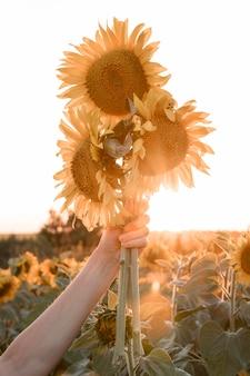 Zbliżenie dłoni trzymającej słoneczniki