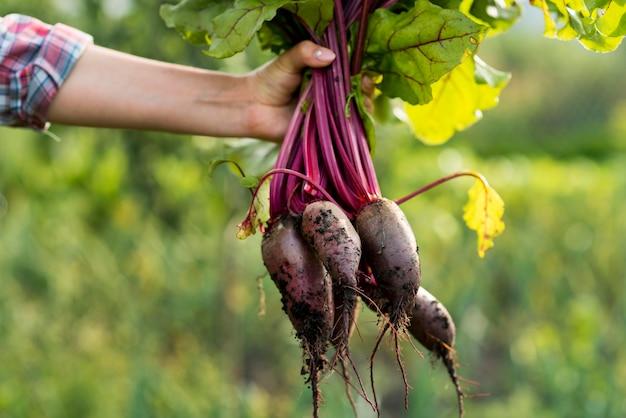 Zbliżenie dłoni trzymającej warzywa