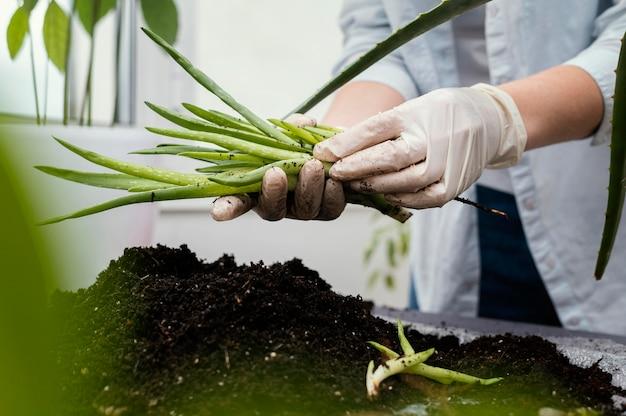 Zbliżenie dłoni w rękawiczkach, trzymając roślinę