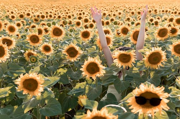 Zbliżenie dłoni w słonecznikowym polu