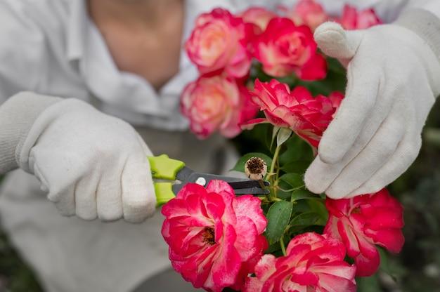 Zbliżenie dłonie tnące zwiędły kwiat