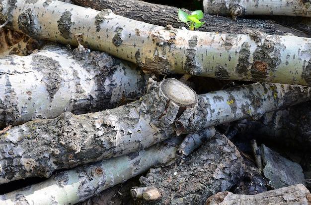 Zbliżenie drewna opałowego ze starej topoli z szorstką białą korą