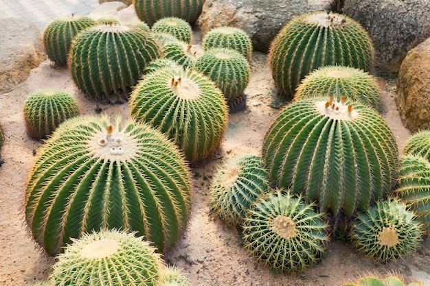 Zbliżenie drzewa kaktusa