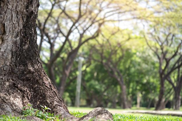 Zbliżenie duży bagażnik i naturalni zamazani zieleni drzewa w jawnym parku