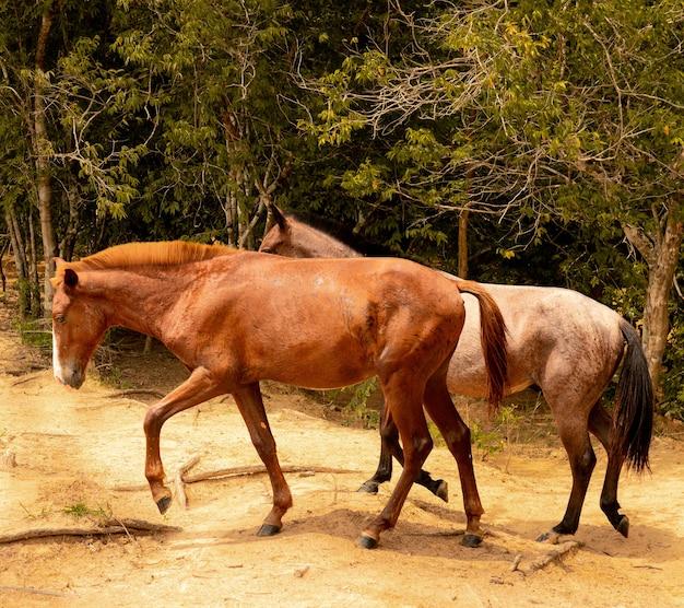 Zbliżenie dwóch koni w lesie pokrytym drzewami w świetle słonecznym