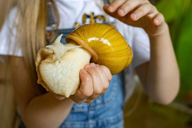 Zbliżenie dziewczyna ręce trzymając ogromny mokry ślimak achatina korzystających z właściciela zwierząt