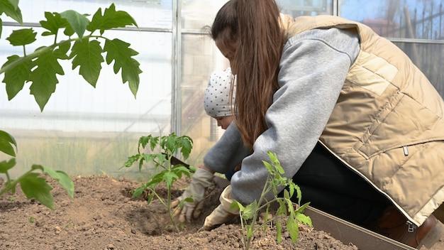 Zbliżenie: dziewczyna sadzi sadzonki w szklarni.