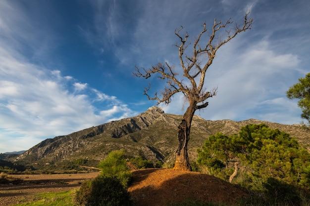 Zbliżenie dziwnego drzewa pod błękitnym niebem w ciągu dnia