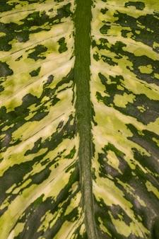 Zbliżenie fascynujących liści roślin