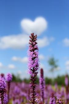 Zbliżenie fioletowych kwiatów z chmurami w kształcie serca