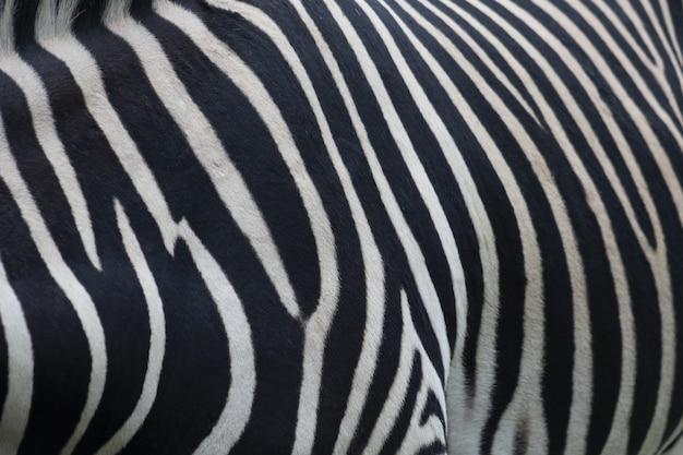Zbliżenie futra zebry